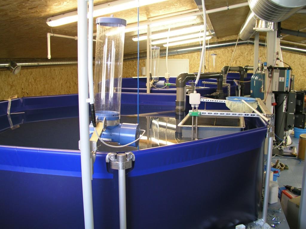 Выращивание рыбы как бизнес рыбоводный модуль осетр 28